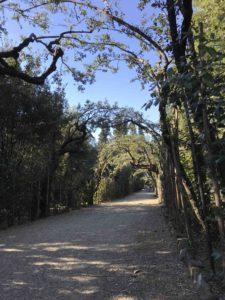 Boboli - viale con pergola