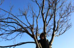 intervista l'albero