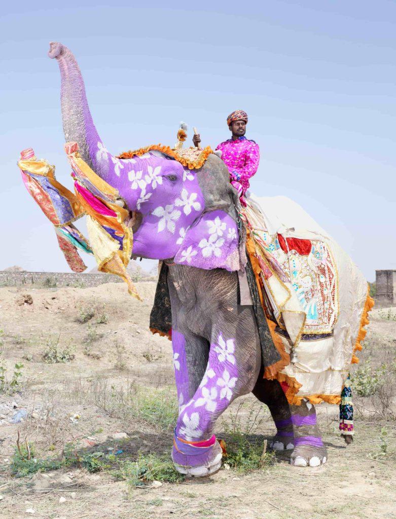 CHARLES FREGER_Painted Elephants (1)